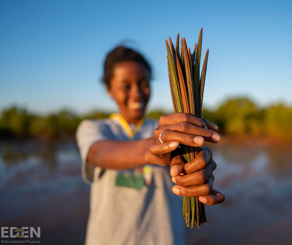 Eden reforestation projects, Madagascar, Propagules